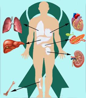 En organdonor er en person, der har givet tilsagn til at donere en eller flere organer i forbindelse med sin død.