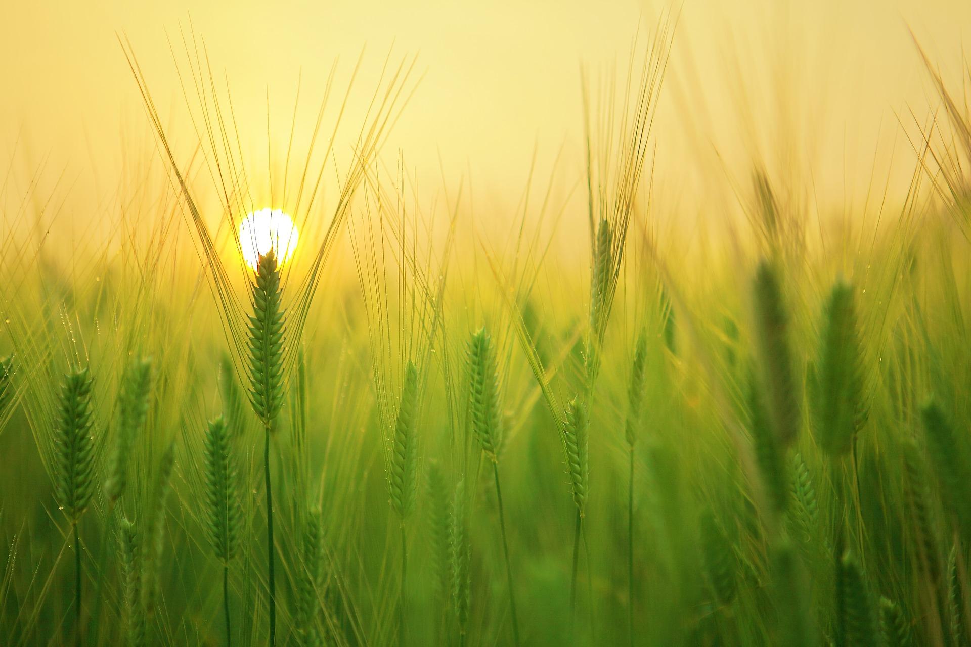 landmand landbrug mark